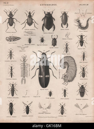 ENTOMOLOGY 3. Insects beetles. BRITANNICA, antique print 1860 - Stock Photo
