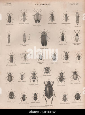 ENTOMOLOGY 4. Insects beetles. BRITANNICA, antique print 1860 - Stock Photo