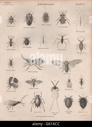 ENTOMOLOGY 10. Insects beetles flies fly. BRITANNICA, antique print 1860 - Stock Photo