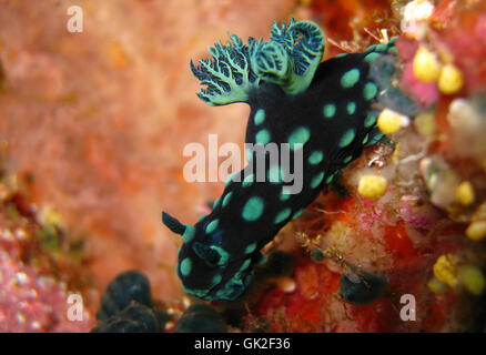 underwater snail macro - Stock Photo