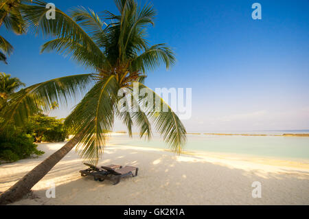 deckchair under palm trees on dream beach - Stock Photo