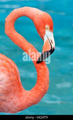animal bird wild - Stock Photo