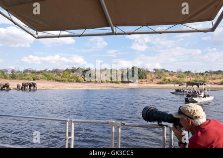 Photographer photographing a herd of African Elephants from a safari boat on the Chobe river Botswana Africa - Stock Photo