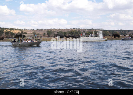 Tourists game viewing on safari boats on the Chobe river Botswana Africa as a herd of elephants drink at the river. - Stock Photo