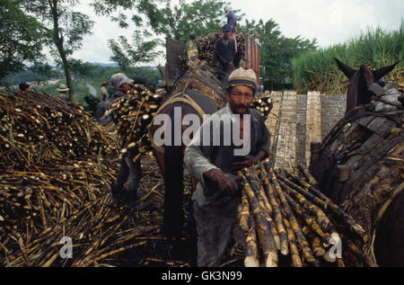 ca. 1980-1995, Colombia --- Harvested sugarcane is loaded onto a truck at the edge of a field near Buga, in Colombia. - Stock Photo