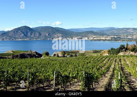 Vineyard overlooking Okanagan Lake in Naramata, British Columbia, Canada. Naramata is near Penticton in the Okanagan - Stock Photo