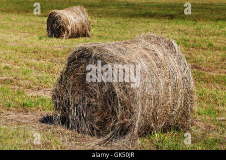Dry round hay bales on field, natural background - Stock Photo