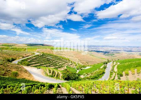 wine arrangement travel - Stock Photo