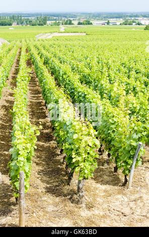 arrangement travel agriculture - Stock Photo