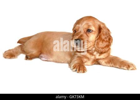 isolated animal pet - Stock Photo