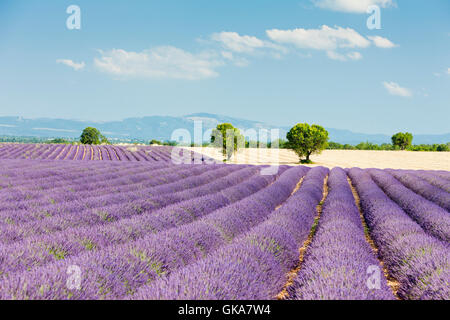 agriculture farming field - Stock Photo