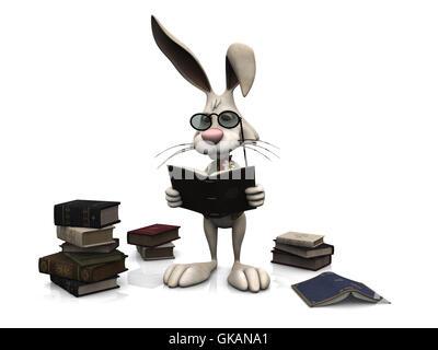 rabbit hare bunny - Stock Photo