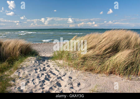 way to the beach by dunes on the baltic sea in heiligenhafen - Stock Photo
