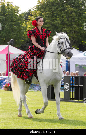 Celia Navaja with her Andulusian Stallion Xaired, a display incorporating dancing Andalusian horses_Southport Flower - Stock Photo