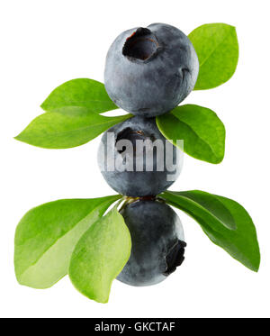 blueberries isolated on the white background. - Stock Photo