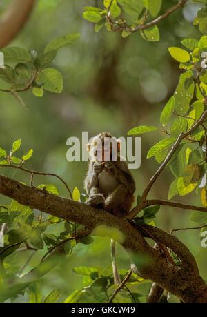 Isolation in monkeys