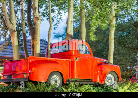 Art installation called Ford Grove, '52 Ford Pick up Truck, encroached upon by aspen trees. - Stock Photo