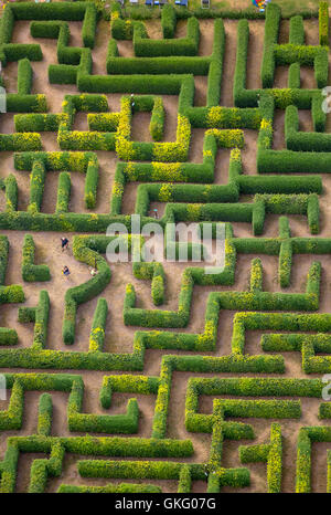 Aerial view, hedge maze, labyrinth, maze Bollewick, Bollewick, Mecklenburg Lakelands, Mecklenburgian Switzerland, - Stock Photo