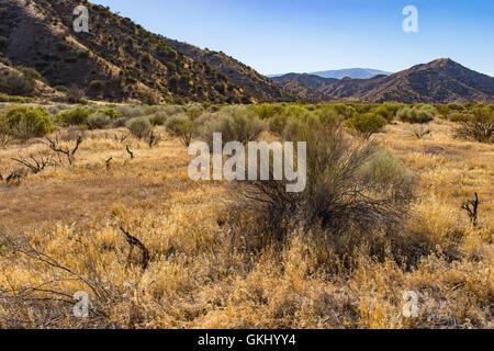 Grass and bushes grow across distance of California grassland wilderness. - Stock Photo