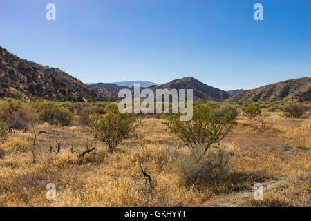 Scrub brush scattered across wilderness grassland in southern California. - Stock Photo