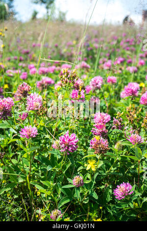 Wild flowering meadow on a blurred background - Stock Photo