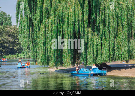 A large willow tree overhanging the boating lake in Regent's Park in central London, UK. - Stock Photo