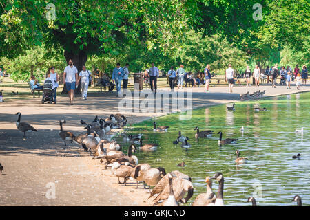 Lake London summer, tourists walk beside the boating lake in Regent's Park on a summer afternoon, London, UK. - Stock Photo