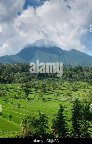 Rice fields below Mount Agung in Bali, Indonesia. - Stock Photo