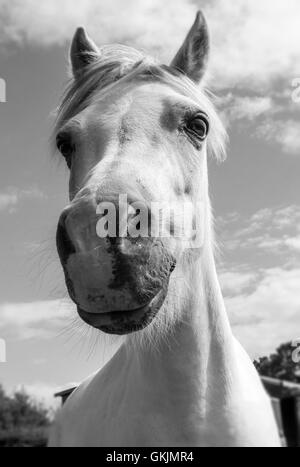 Up close with a Pony. - Stock Photo