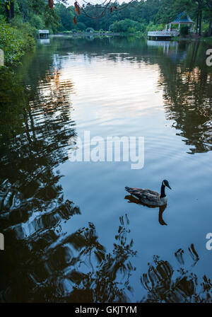 A lone Canada goose swims on a glassy, peaceful pond at Vines Botanical Gardens in Loganville, Georgia. (USA) - Stock Photo