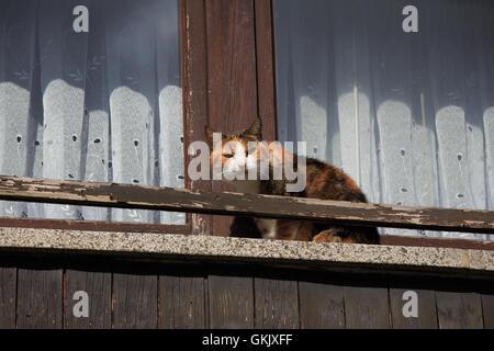 cat on a window - Stock Photo