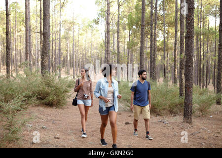 Young friends strolling through the pine tree plantation in the late afternoon sunshine while wearing casual clothing - Stock Photo