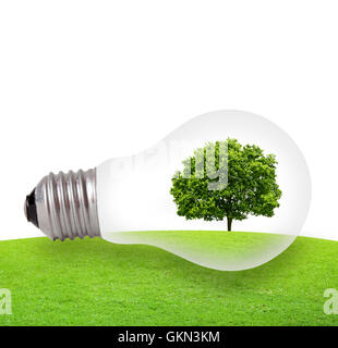 Eco concept, green tree growing in a bulb - Stock Photo