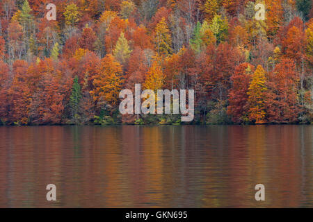 Mixed forest showing foliage of deciduous trees in colourful autumn colours along lake - Stock Photo