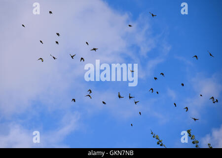 Flock of goldfinch birds - Stock Photo