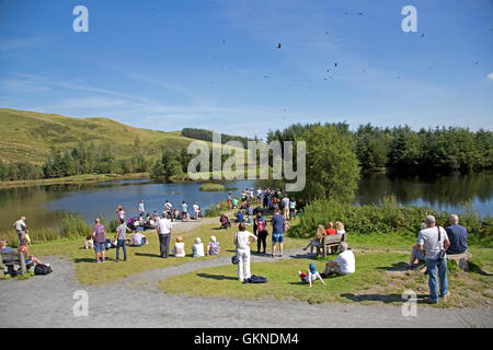 Crowds of visitors watching red kites being fed Bwlch Nant Yr Arian Visitor Centre Ceredigion Mid Wales - Stock Photo