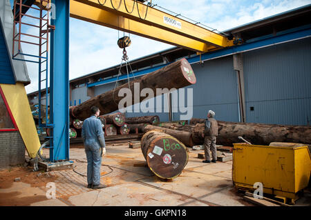 Logs being hauled in a sawmill - Stock Photo