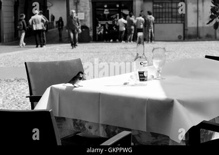 A little bird on a table in the center of the old city of Bergamo. - Stock Photo
