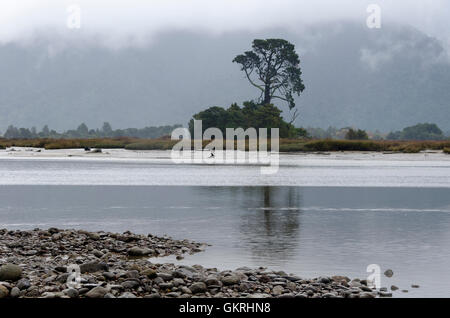 Tree on island in Aorere River estuary, Collingwood, Tasman District, South Island, New Zealand - Stock Photo