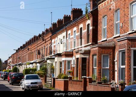 red brick victorian terraced townhouses rushfield avenue south belfast northern ireland - Stock Photo