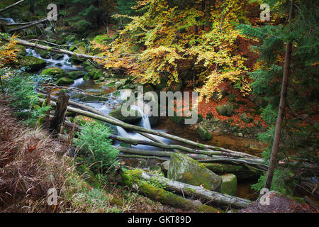 Stream with fallen trees in the wilderness of autumn mountain forest - Stock Photo