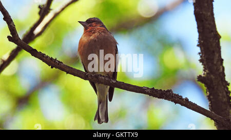 Small bird - Stock Photo