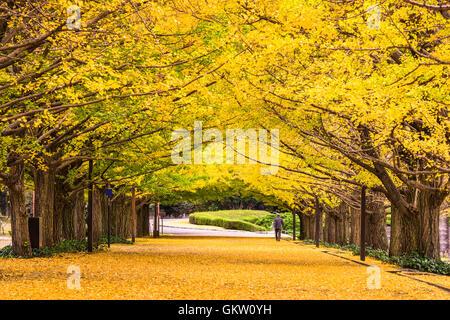 Tokyo, Japan autumn park. - Stock Photo