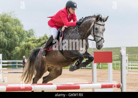 Closeup view of horsewoman in red jacket is jumping a roan horse - Stock Photo