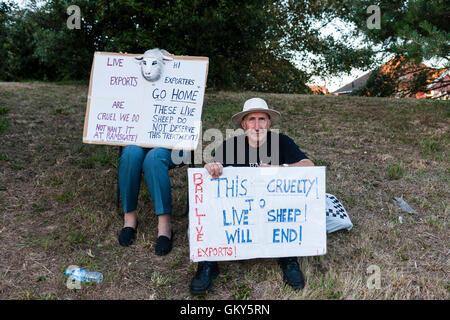 Two people sitting holding placards about cruelty to sheep and live exports during protests held at Ramsgate against - Stock Photo