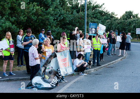 'Ban live exports' protestors standing on side of main road into Ramsgate during peaceful demonstration against - Stock Photo