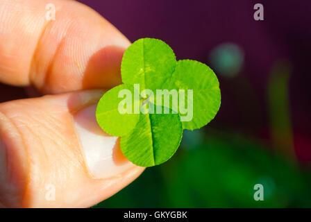 Four leaf clover, Helsinki, Finland - Stock Photo