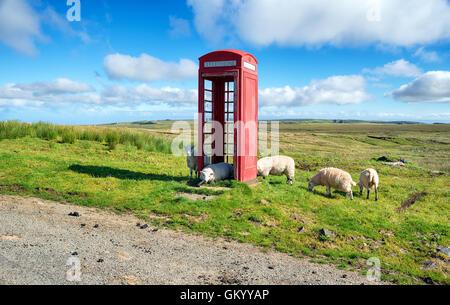 Sheep in a red telephone box on the Isle of Skye in Scotland - Stock Photo