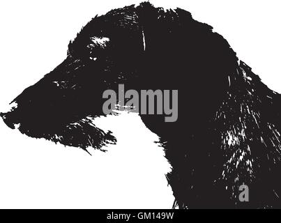 dog, dachshund - Stock Photo