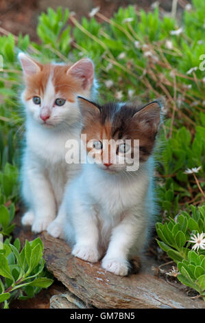 Two kittens sitting on a wall in the garden - Stock Photo